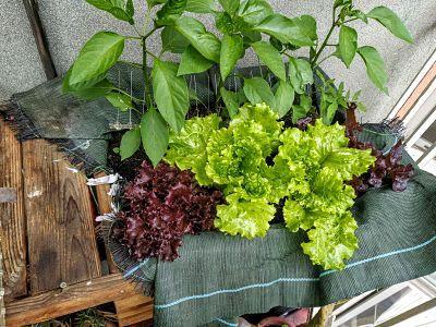 mesa-cultivo-Tenerias-Ekaia-Eko-compost
