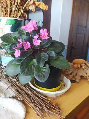 Abono organico ecologico Cuidar plantas interior Ekaia eko compost tienda mata plantas
