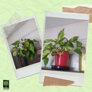 Mejora una planta con abono orgánico ecológico Ekaia
