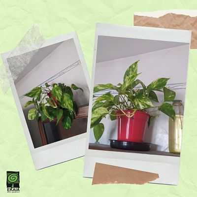 Abono organico ecologico Mejora una planta con compost Ekaia eko tienda
