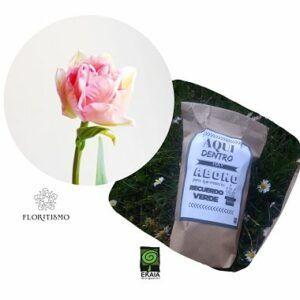 Tulipan-doble-Floritismo-Ekaia