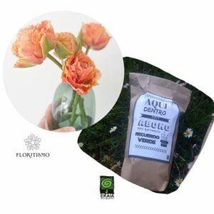 Tulipan-doble-deshilachado-Ekaia-Eko-Floritismo