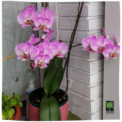 Abono organico Orquideas regalo de San Valentín- Ekaia Shop eko compost tienda