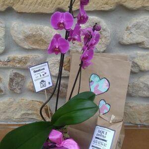 Kit-orquidea-dia-de-la-madre-ekaia-eko-compost
