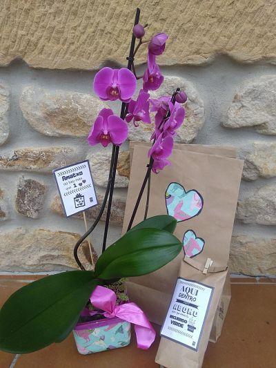 Abono organico ecologico Kit-orquidea-dia-de-la-madre-ekaia-eko-compost