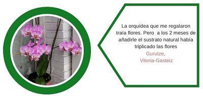 Testimonios-web-orquideas-1-ekaia-eko-compost-shop