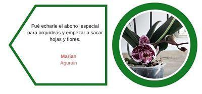 Testimonios-web-orquideas-2-ekaia-eko-compost-shop